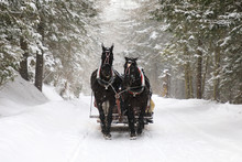 Horse Carriage On The Mountains Road In Winter