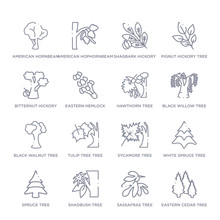 Set Of 16 Thin Linear Icons Such As Eastern Cedar Tree, Sassafras Tree, Shadbush Tree, Spruce White Spruce Sycamore Tulip Tree Tree From Nature Collection On White Background, Outline Sign Icons Or