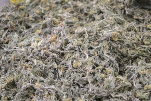 Photo Gnaphalium affine dried herb