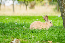 Cute Bunny Rabbit Sitting In Green Grass