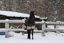 Westphalian Horse In Paddock  In The Snow In Winter