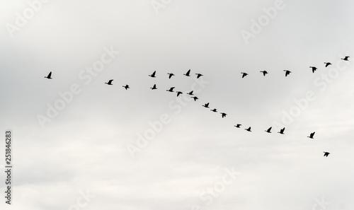 Biebrzański Park Narodowy. Wiosenne rozlewiska Biebrzy Fototapet