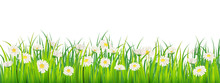 Template Background Spring Field Of Flowers Of Daisies And Green Juicy Grass, Meadow, Blue Sky, White Clouds. Vector, Illustration, Isolated, Banner, Flyer