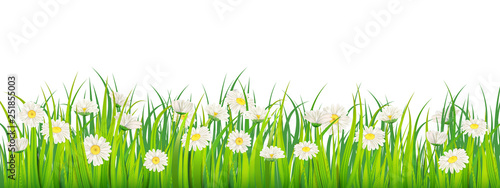 Photo Template background Spring field of flowers of daisies and green juicy grass, meadow, blue sky, white clouds