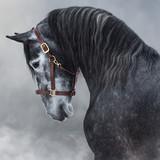 Portret szarego czystej krwi konia andaluzyjskiego w dym. - 251857018