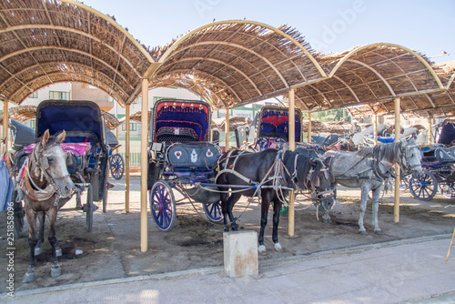 Fotografie, Obraz  Many parked horse carriages waiting for passengers on shadow in Egypt