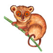 Watercolor hyper-realistic wild animals of Asia - tarsier