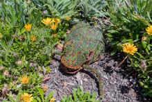 Decorative Frog In The Garden ...