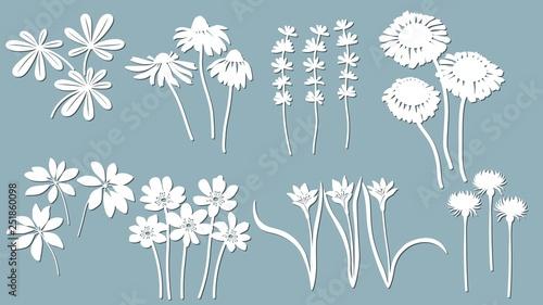 Fotografija Echinacea, chamomile, schefler, noble hepatica, zephyrantes, stokesia