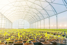Young Plants Growing In A Gree...