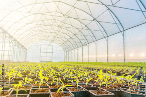Photo Young plants growing in a greenhouse