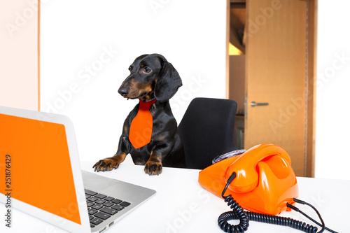 Foto op Aluminium Crazy dog boss management dog in office