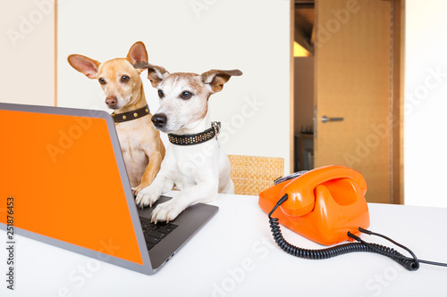 Foto op Canvas Crazy dog boss management dogs in office