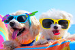 canvas print picture - happy dogs with sunglasses