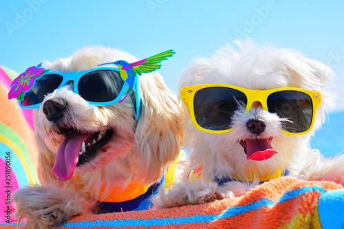 Obraz happy dogs with sunglasses - fototapety do salonu