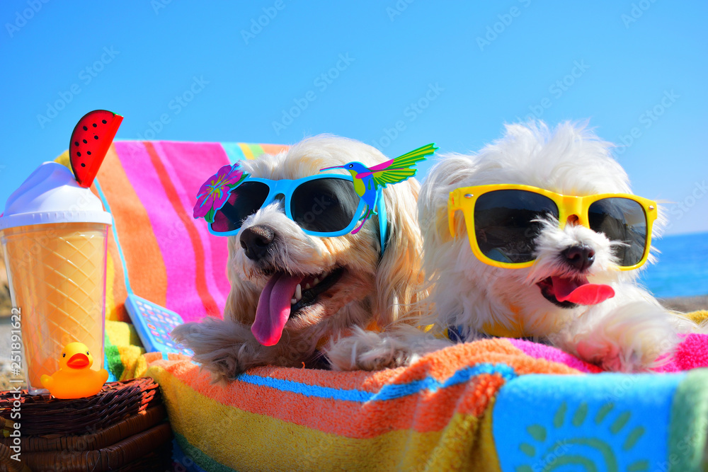 Fototapety, obrazy: happy dogs with sunglasses