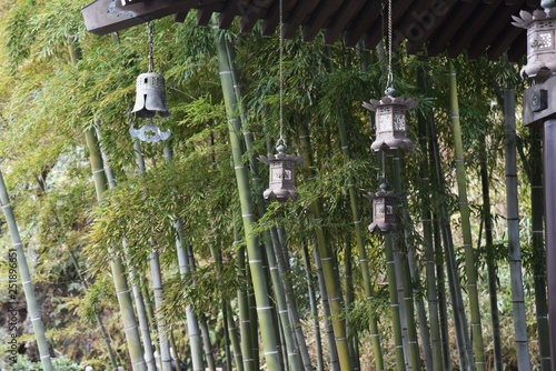 Photo  A scene of Japanese culture / Lanterns and bamboo forest in the Japanese temple