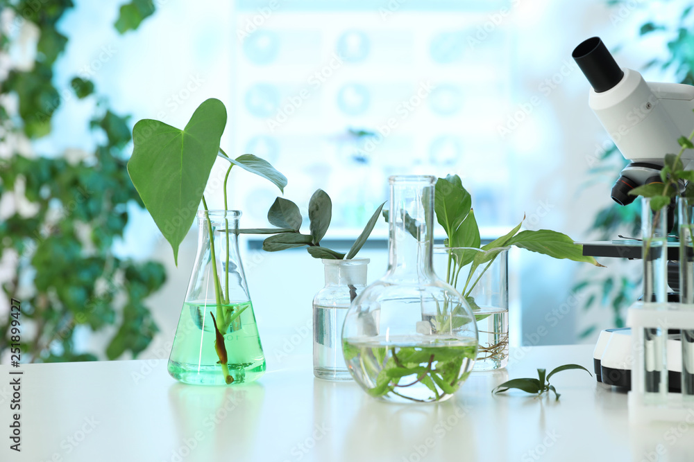 Fototapety, obrazy: Laboratory glassware with plants and microscope on table. Biological chemistry