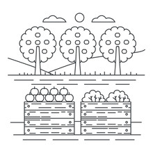 Thin Line Style Fruits Garden Yard Concept With Wooden Crate Of Apples Vector Illustration.