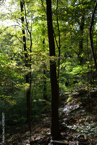 Trees in a Forest in Westchester, New York
