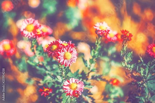 jasne-kwitnace-kwiaty-przyciemniane
