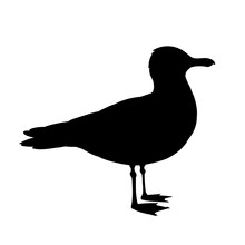 Standing Seagull Silhouette. Vector Illustration In Monochrome Style On White Background. Element For Your Design. Bird Black Shape. European Herring Gull