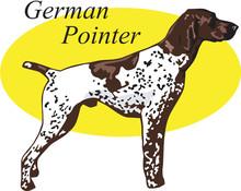 German Pointer Vector Illustra...