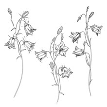 Bluebell Flowers. Sketch. Hand Drawn Outline Vector Illustration, Isolated Floral Elements For Design On White Background.