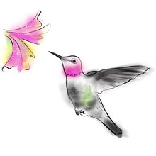 Hummingbird, Hand Drawn Graphic Birds. Anna's Hummingbird, Calypte Anna.