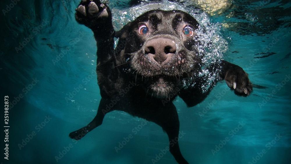 Fototapety, obrazy: funny dog