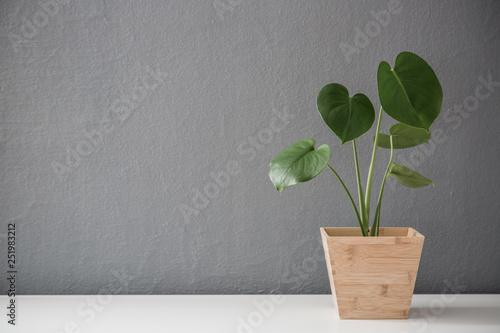 Modern leafy plant in wooden pot