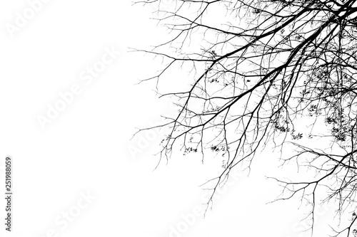 Bare tree branches on a pale white background Obraz na płótnie