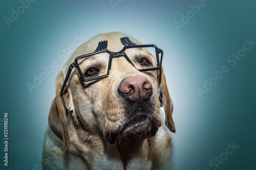 Photo  Retrato de un perro con gafas