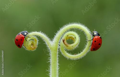 Montage in der Fensternische Lowenzahn ladybug on leaf