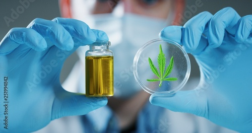 Fotografía  Portrait of scientist with mask and gloves checking and analizing a biological and ecological hemp plant used for herbal pharmaceutical cbd oil in a laboratory