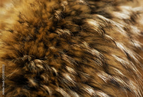 Wall Murals Owl Texture of fur - fox - high resolution. Natural animal fur texture as background.