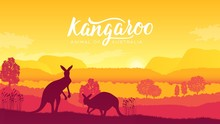Australia Kangaroo On Landscape Nature Background. Wild Animals In Their Natural Habitat. Sunrise Vector Illustration