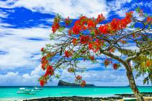 Beautiful Scenery Of Mauritius Island -tranquil Beach In Cap Malheureux With Flamboyant Tree