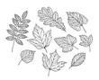 Set of leaves. Nature, foliage sketch. Decorative vector illustration
