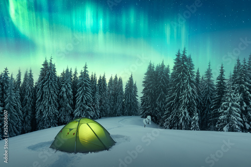 Photo Stands Night blue Aurora borealis. Northern lights in winter forest. Sky with polar lights and stars. Night winter landscape with aurora, green tent and pine tree forest. Travel concept