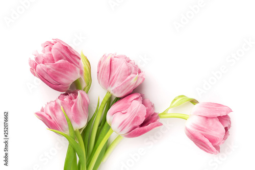 Canvas Print Pink tulips isolated on white background. Top view.