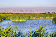 Ponds In The San Francisco Bay Area Marshes; On A Background Hills Covered By Soberanes Fire, California