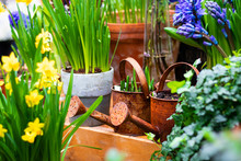 Corner Of Garden With Pots Full Of Green Plants, Two Rusty Watering Pots With Ground And Flowers. Garden Composition, Landscape Gardening. Horizontal.