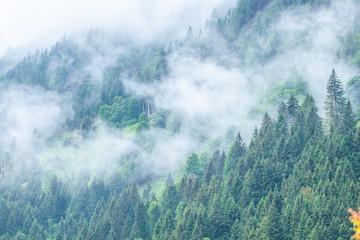 Fototapeta Współczesny foggy forest