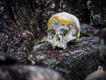 Human Skull Covered In Lichen ...
