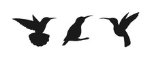 Set Of Three Detailed Black Hummingbird Silhouettes Isolated On White