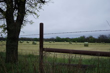 Hay Bales Behind A Barbed Wire Fence