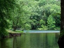 Trees Along The River Bank