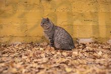 Grey Stray Cat Sitting Near Ye...