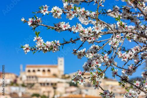 Almond blossom season in village Selva, Mallorca Wallpaper Mural